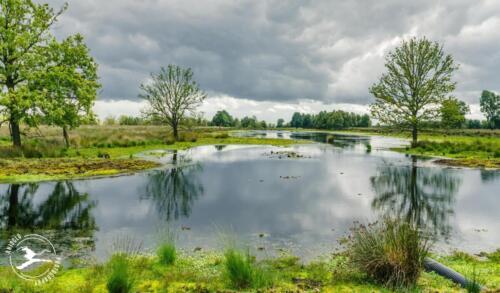 N1 Nieuw Dordecht- Weiterveen (Drenthe)