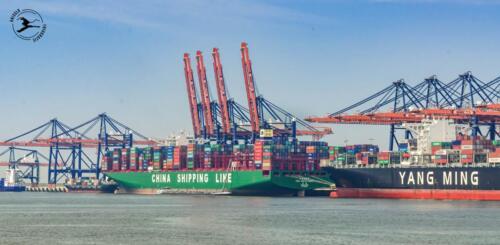 Containerschepen Maasvlakte