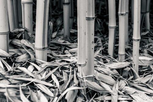 Door de bamboe het bos niet meer zien