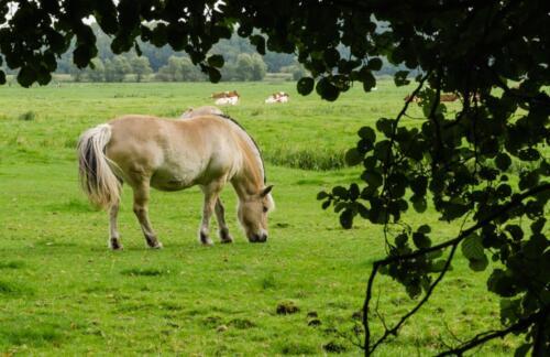 D9. Paard in de wei
