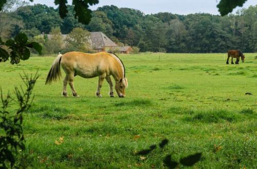D8. Paard in de wei